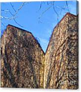 Ivy Covered Wall Canvas Print