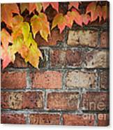Ivy Over Brick Wall Canvas Print