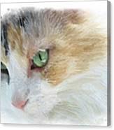 Izzy's Eyes Canvas Print