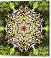 Jack In The Pulpit Mandala Canvas Print