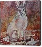 Jack Rabbit Canvas Print