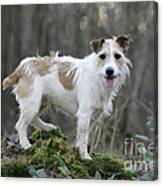 Jack Russell Dog In Autumn Setting Canvas Print
