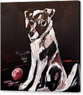 Jack Russell II Canvas Print
