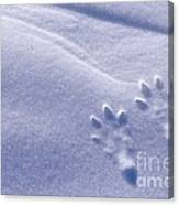 Jackrabbit Tracks In Snow Canvas Print