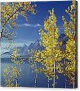 1m9206-jackson Lake And Aspens, Wy Canvas Print