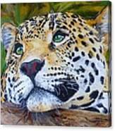 Jaguar Big Cat Original Oil Painting Hand Painted 8 X 10 By Pigatopia Canvas Print