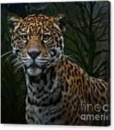 Jaguar Two Canvas Print