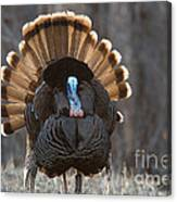 Jake Eastern Wild Turkey Canvas Print