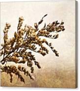 Janice Joplin Canvas Print