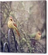 January Cardinals Canvas Print