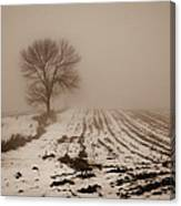 January Fog Canvas Print