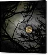 January Moon In Treetops Canvas Print