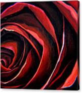 January Rose Canvas Print