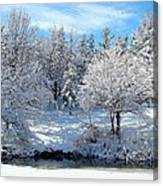 January Trees Canvas Print