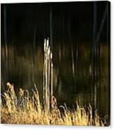 January's Gold 2013 Canvas Print