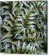 Japanese Ferns Canvas Print