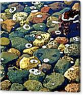 Japanese Garden Pool Rocks Canvas Print