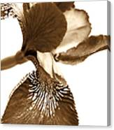 Japanese Iris Flower Sepia Brown Canvas Print