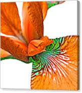 Japanese Iris Orange White Five Canvas Print