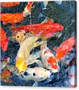 Japanese Koi Pond Canvas Print