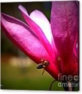 Japanese Magnolia Bloom Canvas Print