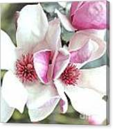 Japanese Magnolia Canvas Print