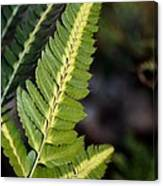Japanese Painted Fern Canvas Print