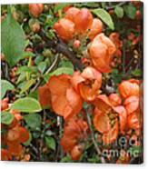 Japanese Quiche Blossoms Canvas Print