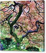 Japanese Tree In Garden Canvas Print