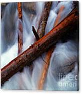 Jasper - Beauty Creek Logs Canvas Print