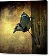 Jay On The Side Canvas Print