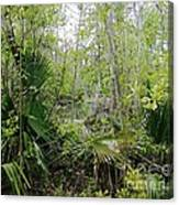 Jean Lafitte National Preserve Swamp Louisiana Canvas Print