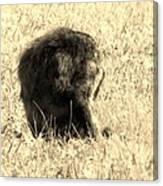 Jean Lafitte's Headless Graveyard Cat Canvas Print