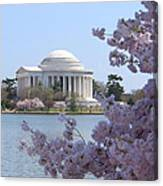 Jefferson Memorial - Cherry Blossoms Canvas Print