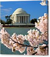 Jefferson Memorial Cherry Trees Canvas Print