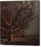 Jekyll Island Sunset Canvas Print