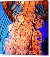 Jelly Atlanta Aquarium Ga Canvas Print