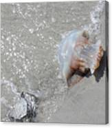 Jelly Ball And Oyster Shell Washed Upon Nc Beach Canvas Print