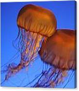 Jelly Fish In Harmony Canvas Print