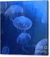 Jellyfish   #0547 Canvas Print