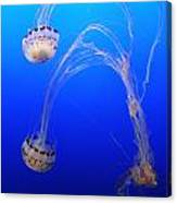 Jellyfish 1 Canvas Print