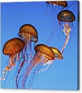 Jellyfish Swarm Canvas Print