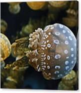 Jellyfish Swimming Right Canvas Print