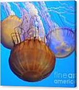 Jellyfish Trio Canvas Print