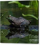 Jeremiah Was A Bullfrog Canvas Print