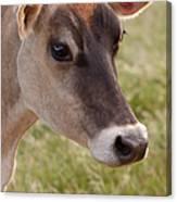 Jersey Cow Portrait Canvas Print