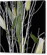 Jersey Lilies Canvas Print