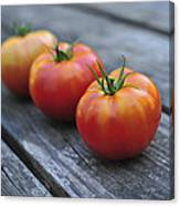 Jersey Tomatoes  Canvas Print