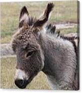 Jerusalem Donkey Canvas Print