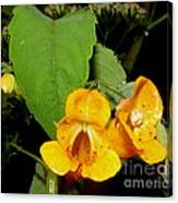 Jewel Weed Canvas Print